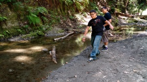 Learning to skip stones in Aptos Creek in the Forest of Nisene Marks