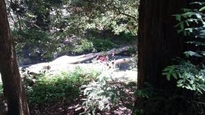 Having a healthy lunch alongside Aptos Creek in the Forest of Nisene Marks