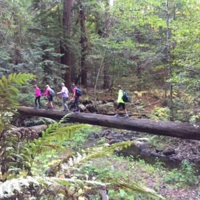Crossing Aptos Creek on a fallen redwood tree
